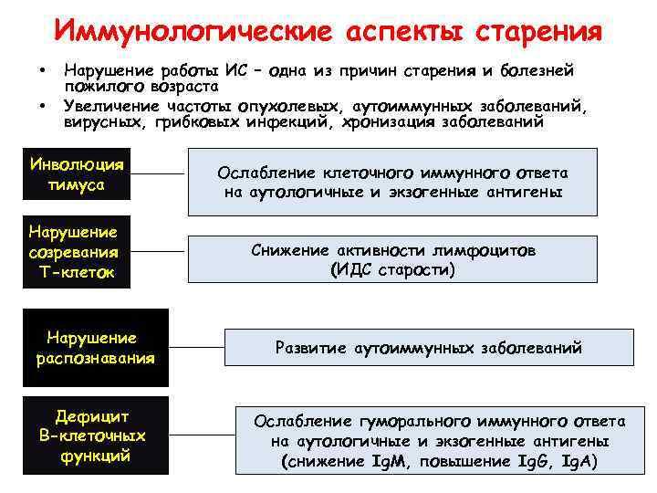 Иммунологические аспекты старения • • Нарушение работы ИС – одна из причин старения и
