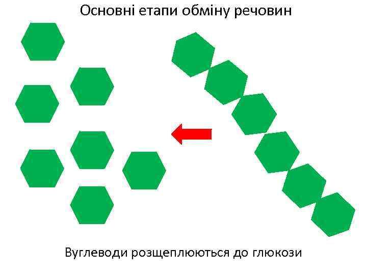 Основні етапи обміну речовин Вуглеводи розщеплюються до глюкози