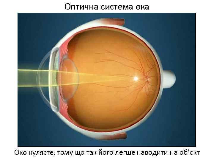 Оптична система ока Око кулясте, тому що так його легше наводити на об'єкт