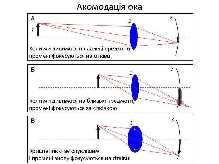 Акомодація ока Коли ми дивимося на далекі предмети, промені фокусуються на сітківці Коли ми