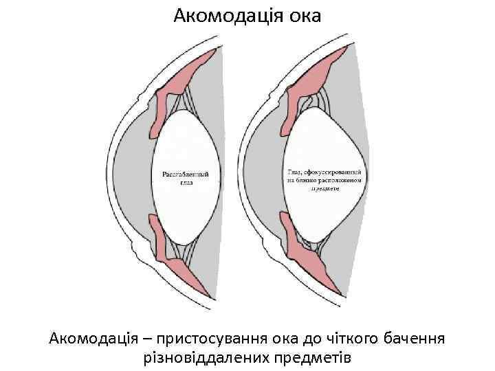 Акомодація ока Акомодація – пристосування ока до чіткого бачення різновіддалених предметів