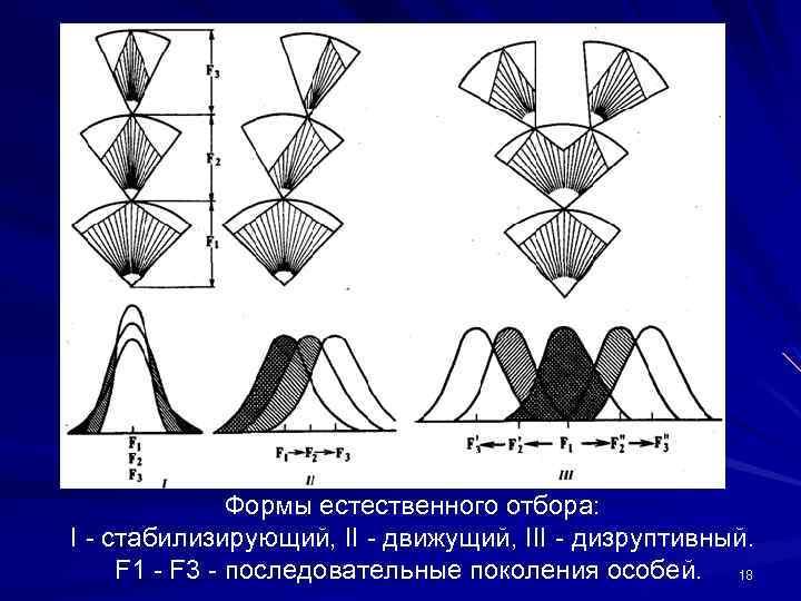 Формы естественного отбора: I - стабилизирующий, II - движущий, III - дизруптивный. F 1