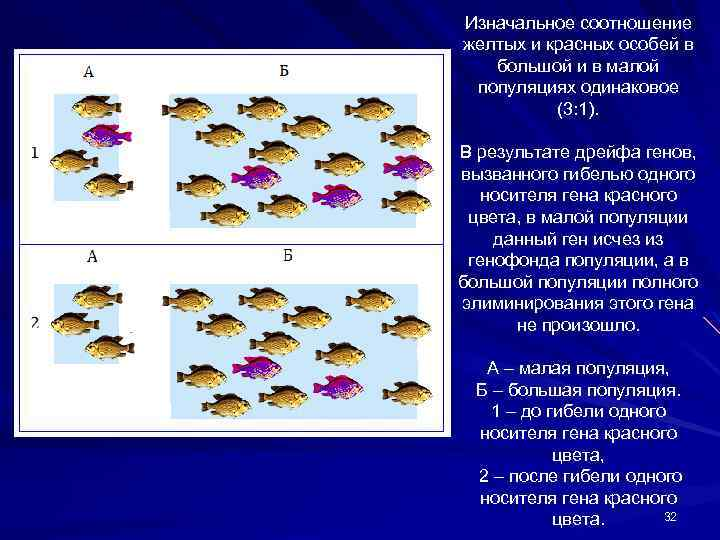 Изначальное соотношение желтых и красных особей в большой и в малой популяциях одинаковое (3: