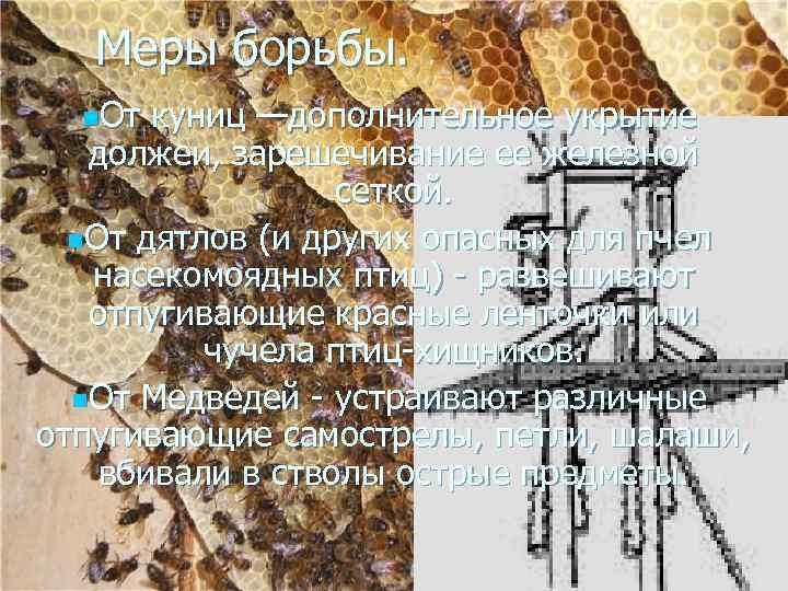 Меры борьбы. n. От куниц —дополнительное укрытие должеи, зарешечивание ее железной сеткой. n. От