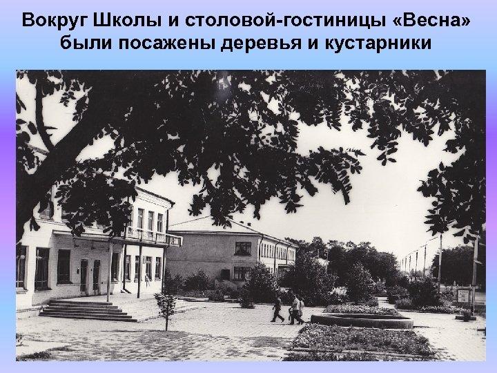 Вокруг Школы и столовой-гостиницы «Весна» были посажены деревья и кустарники
