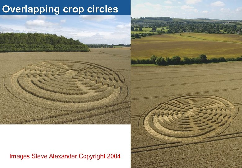 Overlapping crop circles Images Steve Alexander Copyright 2004