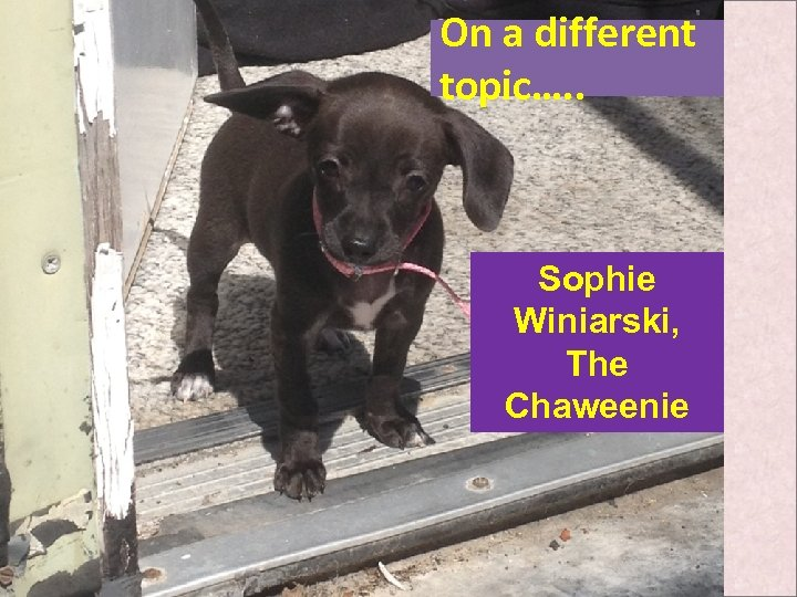 On a different topic…. . Sophie Winiarski, The Chaweenie