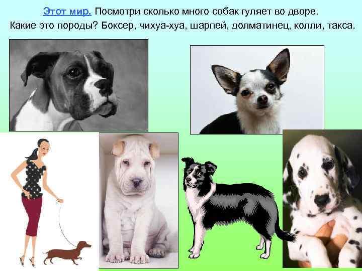 Этот мир. Посмотри сколько много собак гуляет во дворе. Какие это породы? Боксер, чихуа-хуа,