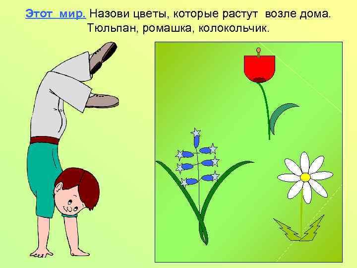 Этот мир. Назови цветы, которые растут возле дома. Тюльпан, ромашка, колокольчик.