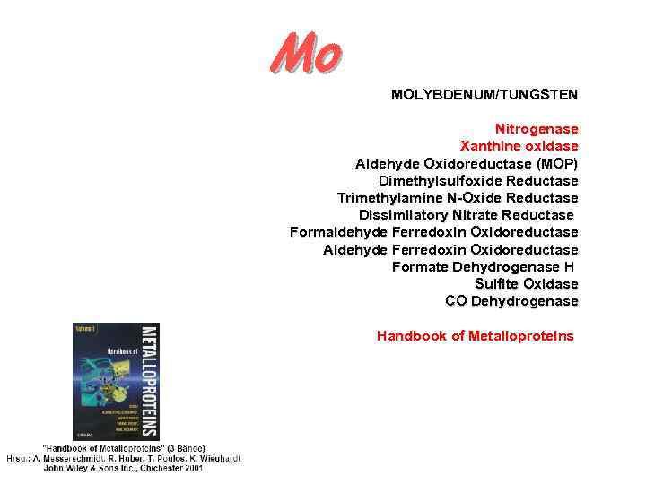 Mo MOLYBDENUM/TUNGSTEN Nitrogenase Xanthine oxidase Aldehyde Oxidoreductase (MOP) Dimethylsulfoxide Reductase Trimethylamine N-Oxide Reductase Dissimilatory