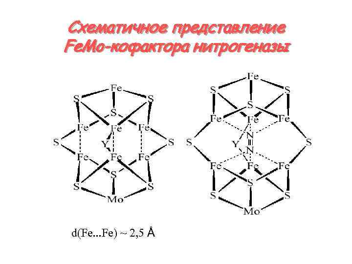 Схематичное представление Fe. Mo-кофактора нитрогеназы d(Fe. . . Fe) ~ 2, 5 Å