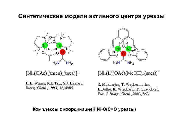 Синтетические модели активного центра уреазы [Ni 2(OAc)3(tmen)2(urea)]+ [Ni 2(L)(OAc)(Me. OH)2(urea)]0 H. E. Wages, K.