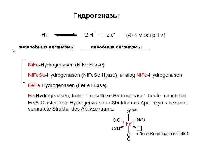 Гидрогеназы анаэробные организмы