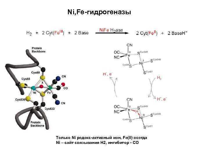 Ni, Fe-гидрогеназы Только Ni редокс-активный ион, Fe(II) всегда Ni – сайт связывания Н 2,