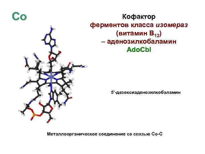 Co Кофактор ферментов класса изомераз (витамин В 12) – аденозилкобаламин Ado. Cbl 5'-дезоксиаденозилкобаламин Металлоорганическое