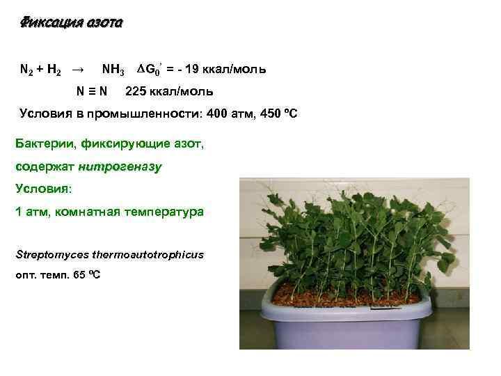 Фиксация азота N 2 + H 2 → NH 3 G 0' = -