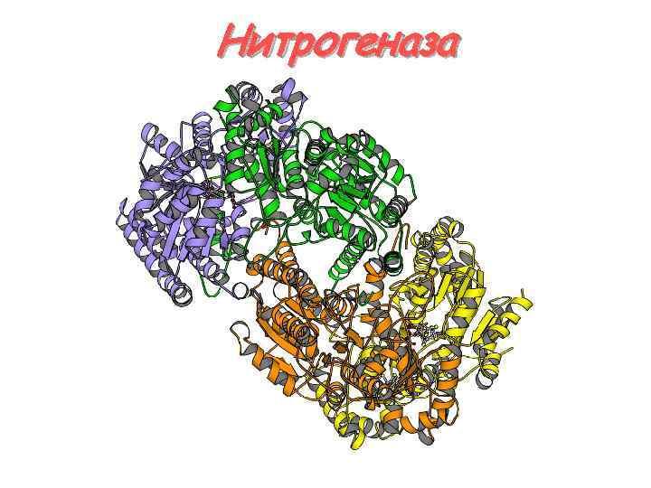 Нитрогеназа
