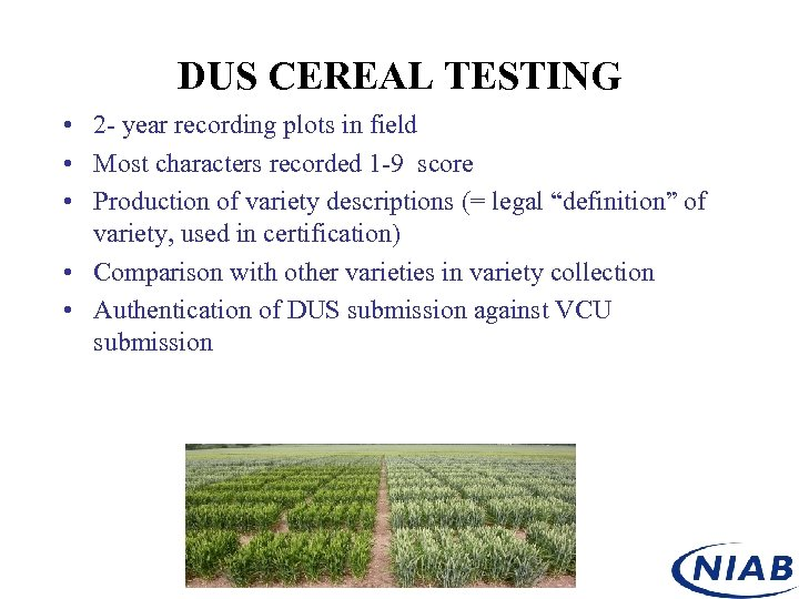 DUS CEREAL TESTING • 2 - year recording plots in field • Most characters