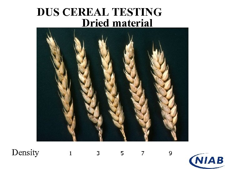 DUS CEREAL TESTING Dried material Density 1 3 5 7 9