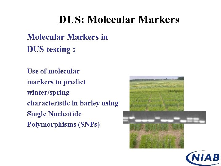 DUS: Molecular Markers in DUS testing : Use of molecular markers to predict winter/spring