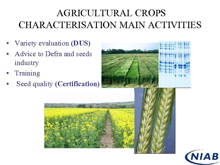 AGRICULTURAL CROPS CHARACTERISATION MAIN ACTIVITIES • Variety evaluation (DUS) • Advice to Defra and