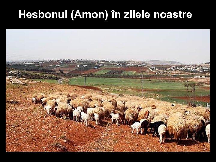Hesbonul (Amon) în zilele noastre