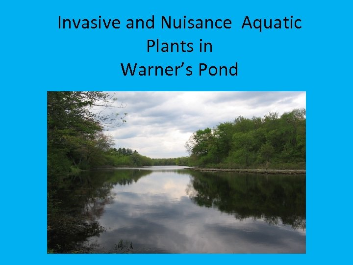 Invasive and Nuisance Aquatic Plants in Warner's Pond