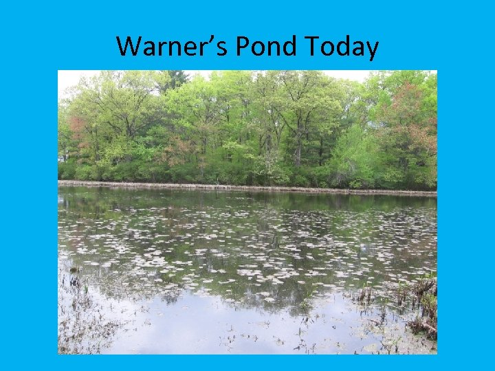Warner's Pond Today