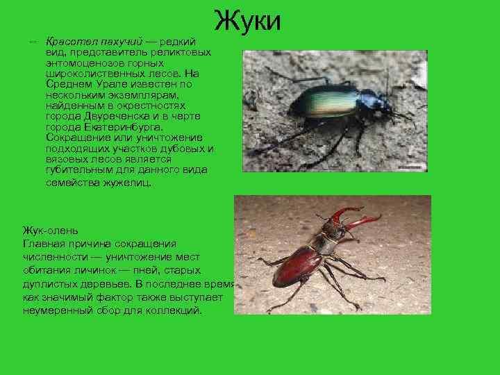 вдоль насекомые урала описание с картинками неприятель