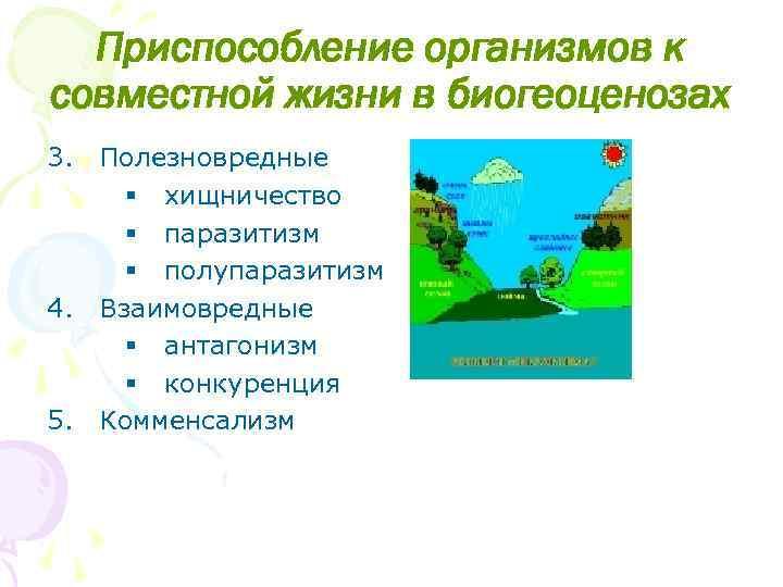 Приспособление организмов к совместной жизни в биогеоценозах 3. Полезновредные § хищничество § паразитизм §