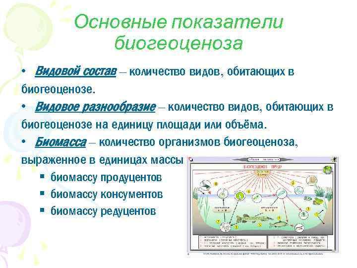 Основные показатели биогеоценоза • Видовой состав – количество видов, обитающих в биогеоценозе. • Видовое