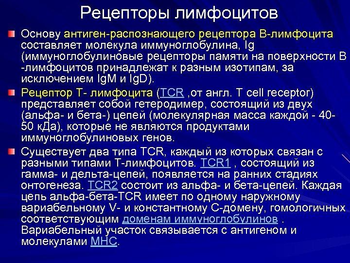 Рецепторы лимфоцитов Основу антиген-распознающего рецептора В-лимфоцита составляет молекула иммуноглобулина, Ig (иммуноглобулиновые рецепторы памяти на