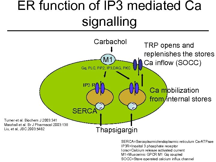 ER function of IP 3 mediated Ca signalling Carbachol M 1 Gq, PLC, Pi.