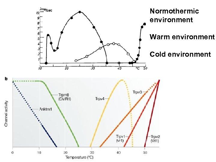 Normothermic Cold fiber environment Warm environment Cold environment
