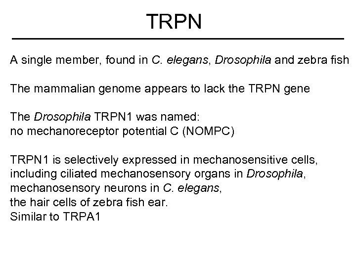 TRPN A single member, found in C. elegans, Drosophila and zebra fish The mammalian