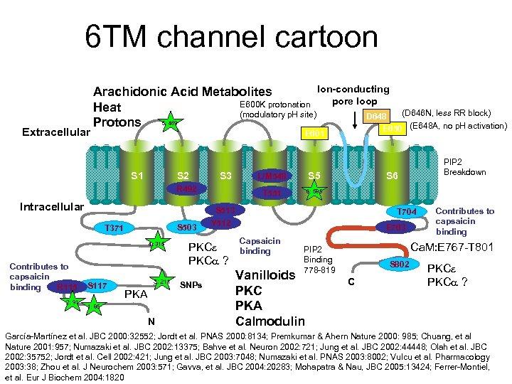 6 TM channel cartoon Extracellular Ion-conducting Arachidonic Acid Metabolites pore loop E 600 K