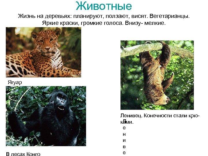 Животные Жизнь на деревьях: планируют, ползают, висят. Вегетарианцы. Яркие краски, громкие голоса. Внизу- мелкие.