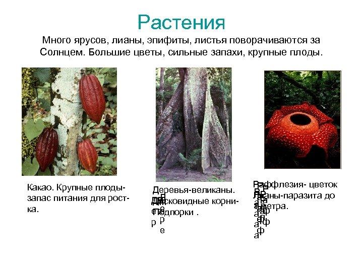 Растения Много ярусов, лианы, эпифиты, листья поворачиваются за Солнцем. Большие цветы, сильные запахи, крупные
