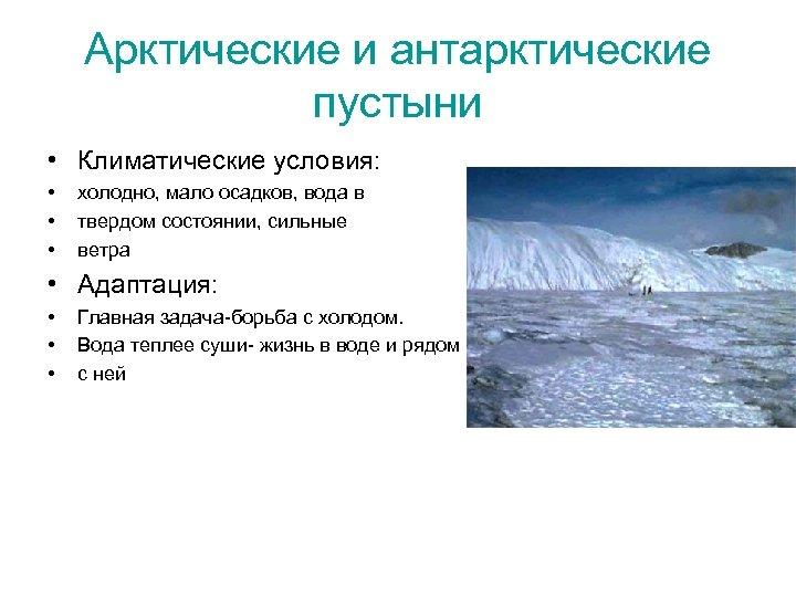 Арктические и антарктические пустыни • Климатические условия: • • • холодно, мало осадков, вода