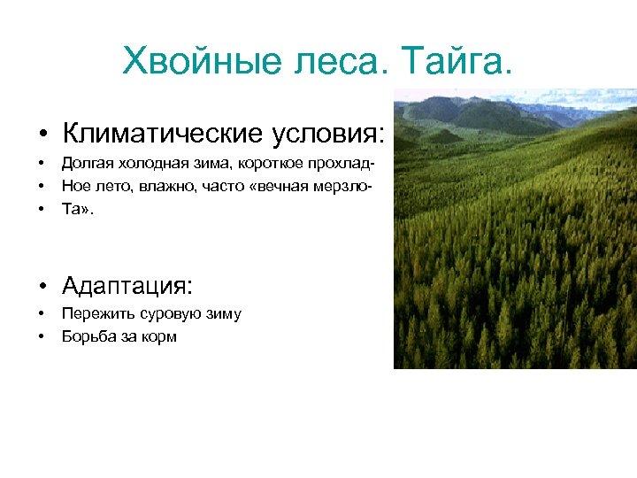 Хвойные леса. Тайга. • Климатические условия: • • • Долгая холодная зима, короткое прохлад.