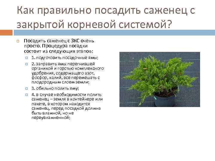 Для выращивания закрытой корневой системой