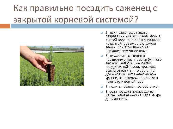 Выращивание саженцев с закрытой корневой системой 87