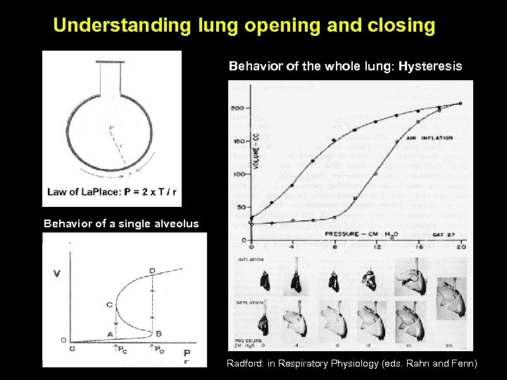 Understanding lung opening and closing Behavior of the whole lung: Hysteresis Behavior of a