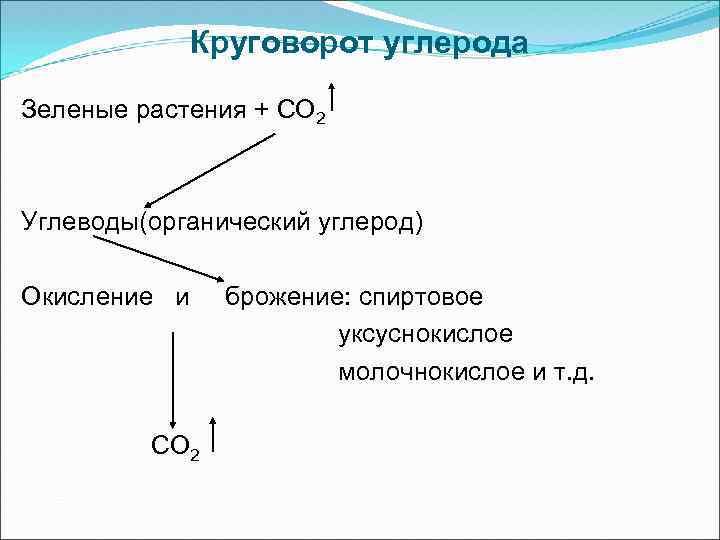 Круговорот углерода Зеленые растения + СО 2 Углеводы(органический углерод) Окисление и СО 2 брожение: