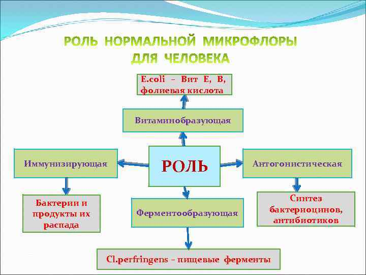 E. сoli – Вит Е, В, фолиевая кислота Витаминобразующая Иммунизирующая Бактерии и продукты их