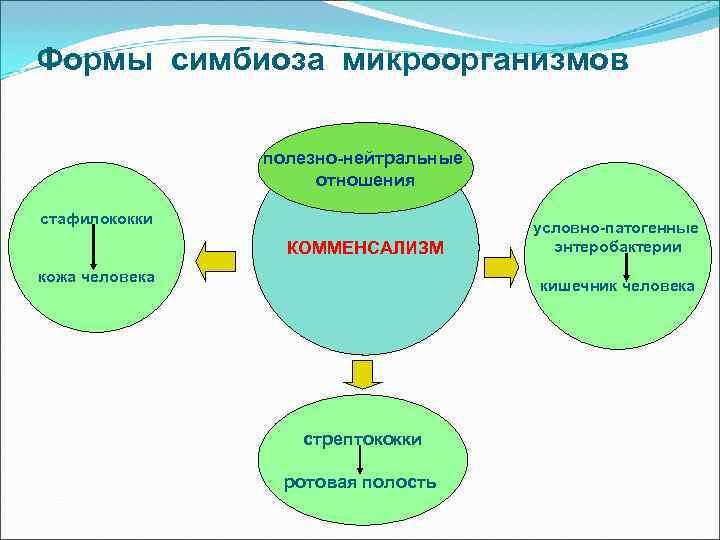 Формы симбиоза микроорганизмов полезно-нейтральные отношения стафилококки КОММЕНСАЛИЗМ кожа человека условно-патогенные энтеробактерии кишечник человека стрептококки