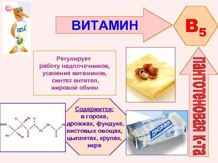 ВИТАМИН Регулирует работу надпочечников, усвоение витаминов, синтез антител, жировой обмен Содержится: в горохе, дрожжах,