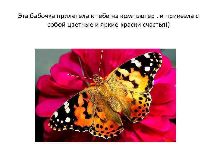 Эта бабочка прилетела к тебе на компьютер , и привезла с собой цветные и