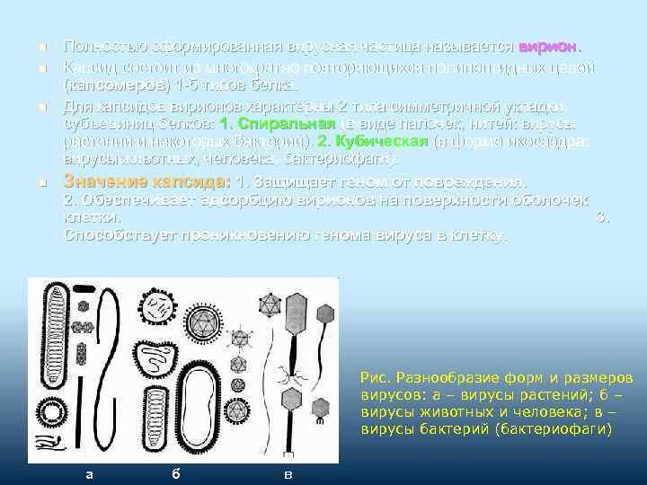 n n Полностью сформированная вирусная частица называется вирион. Капсид состоит из многократно повторяющихся полипептидных