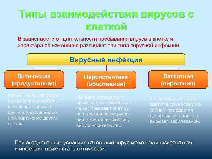 Типы взаимодействия вирусов с клеткой В зависимости от длительности пребывания вируса в клетке и